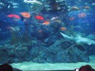 Thailand 2012 Aquarium