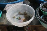 Schildkröten-Babys